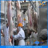 Новый тип Professional скота убоя скота производства завода 6
