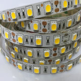 5m 300LEDs SMD5050 Luz blanca Epoxy impermeable LED Light Strip