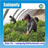 Serra solare di marca di Sainpoly del fornitore della Cina per il pomodoro