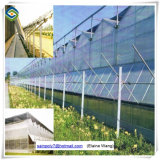 Verre de Venlo serre commerciale des systèmes hydroponiques Green House