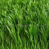 50mm Artificial Grass voor Football Field (DSG85501715)