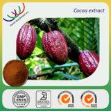 Échantillon gratuit 100% naturel de la théobromine & polyphénols fève de cacao extrait fournisseur