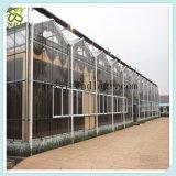 다중 경간 상업적인 유리제 녹색 집