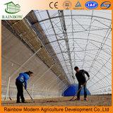 De hete Landbouw Gebruikte Professionele ZonneSerre van de Verkoop