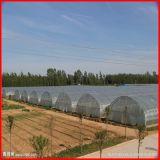 Agricultura Farm Multi-Span plástico filme estufa para vegetais