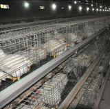 Cage de poulet à rôtir et cage de poulette