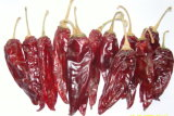 Neues Getreide-amerikanischer roter Paprika