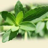 Stevia экстракт листьев