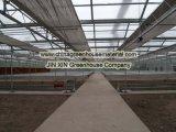 高品質およびよい価格の温室のベンチ