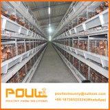Type de pyramide galvanisé cage de batterie de couche de poulet