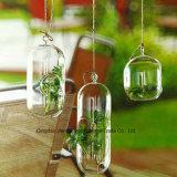 DecorationのためのカスタムClear Glass Terrarium/Glass Vase/Glass Container