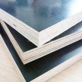 Núcleo de contrachapado de madera dura la película se enfrentan con una buena calidad