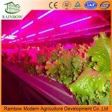 300W 꽃 플랜트 LED는 공장 가격을%s 가진 빛을 증가한다