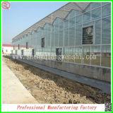 Grandi serre agricole di vetro Sq-18.0 dalla fabbrica della Cina