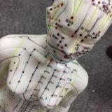 Modello del corpo del modello femminile di agopuntura
