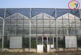 Estufa de vidro Multi-Span comercial das Flores