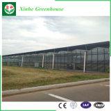 Invernadero agrícola del invernadero de cristal de Venlo para la venta