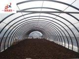 Single-Span Tunnel pour le producteur de légumes de serre avec une haute qualité