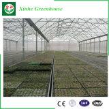 식물성 성장하고 있는과 꽃을%s 다중 경간 필름 온실