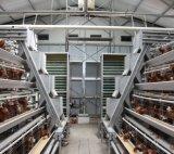 De Kooi van de Kip van de laag van de Apparatuur van het Gevogelte voor het Landbouwbedrijf van het Gevogelte