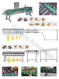 Peseuse de contrôle de légumes et machine de trieuse de poids