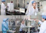 Fábrica de Stevia orgânicos aplica alimentação para diabéticos Extraia Stevia