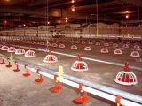 Poultry Equipment mamelon potable système automatique