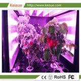 La famiglia di Keisue pianta l'azienda agricola verticale per la famiglia urbana