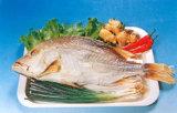 - Alimentos secos salgados Redfin Snapper
