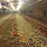 La luz de la estructura de acero galvanizado prefabricados Galpón de pollo de granja de pollos de aves de corral con bajo coste