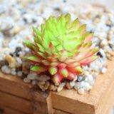 Яркие Echeveria Chihuahuaensis искусственного сочные растения искусственные цветы