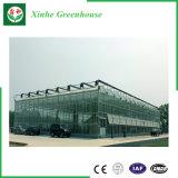 Serre chaude en verre d'agriculture/film publicitaire/jardin avec le système de refroidissement