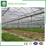 Serra della pellicola di agricoltura per gli ortaggi/fiori