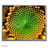 19 LCD de alta luminosidade, Piscina Ad Player, Monitor LCD (ZX190-L02)