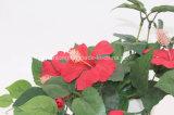 접촉 Hibicus 도매 실제적인 꽃