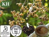 Estratto naturale /Hovenia Acerba Lindl di Hovenia Dulcis di alta qualità