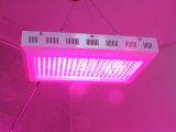 100W - 300W LED는 식물 성장을%s 가볍게 증가한다