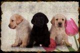 かわいい犬の動物保護の金属の錫の印