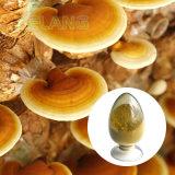 Fabricante de extracto de Ganoderma o Reishi Extracto de hongos/FDA ISO22000;;; Kosher SGS Halal.