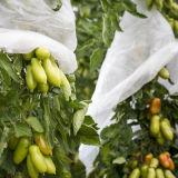 L'agriculture tissu PP non tissé filé lié