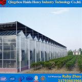 Handelswasserkulturgrünes Glashaus für Traube