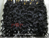 길쌈하는 아프로 꼬부라진 사람의 모발, 머리 씨실 (PPG-l-0007)