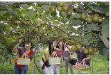 Il fertilizzante microbico di Unigrow sul Kiwifruit, promuove la resistenza di malattia e di sviluppo