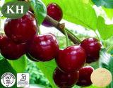 Природные витамины С 5%-25% Acerola Вишня извлечения