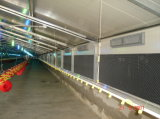Anti-Corrosionプレハブの鉄骨構造の家禽のニワトリ小屋(KXD-CH1501)
