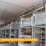 De apparatuur van het het gevogeltelandbouwbedrijf van de grill met gevogelte automatisch het voeden systeem
