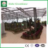 Fleur/fruits/légumes vert en verre croissante des maisons avec système de pare-soleil