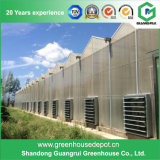 Première serre chaude productrice chinoise (PC) de feuille de polycarbonate à vendre