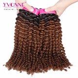 Tessitura crespa brasiliana calda dei capelli ricci di colore T1b/4 di vendita 100% Ombre di Yvonne