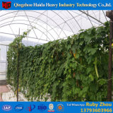 Agricultural&Nbsp; Hydroponic&Nbsp; 熱い電流を通されたワイヤーMeshgreenhouse&Nbsp; 圧延のベンチ